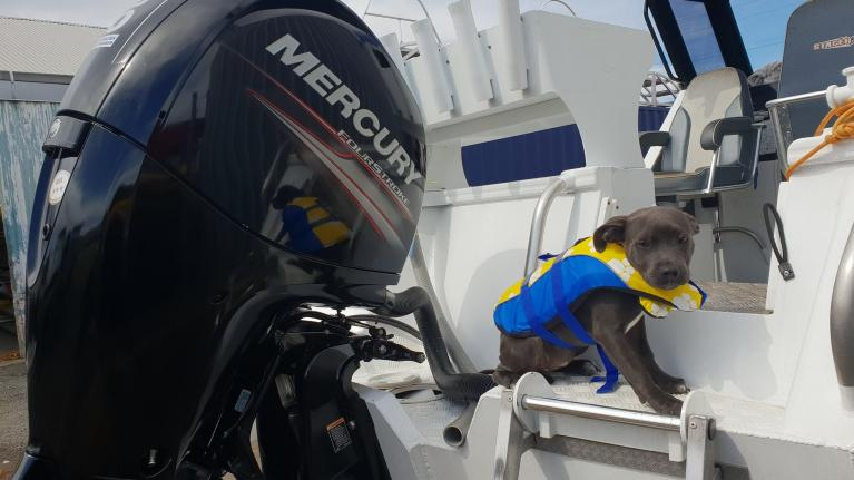 Pooch love the boat as much as you?